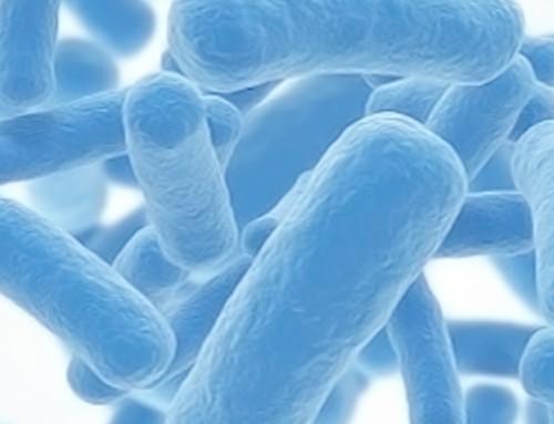 ¿Sabes qué son los probióticos y para qué sirven?
